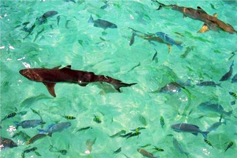 巴雅岛寻鲨之旅