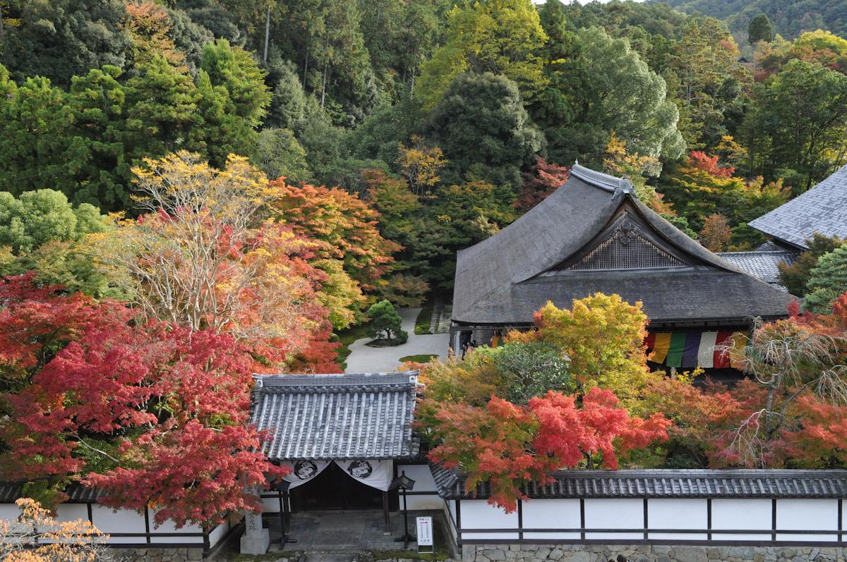 京都一日完美之旅