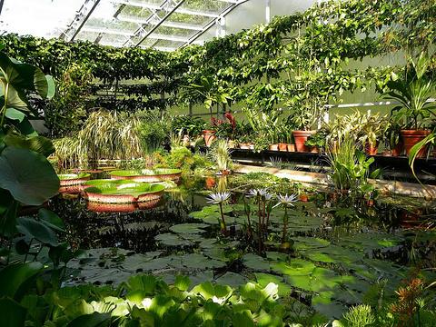 牛津大学植物园的图片