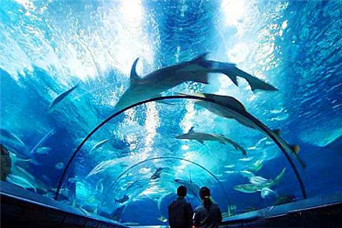 上海海洋水族馆的图片