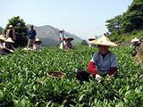 四季香茶庄