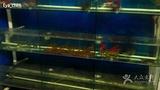 南堤海鲜馆