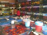 白龙花鸟市场