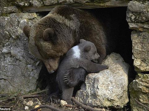 Dählhölzli动物公园旅游景点图片