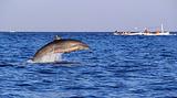巴厘岛观赏海豚