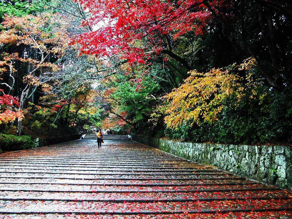 京都完美三日游
