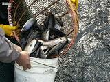中加鲑鱼养殖基地