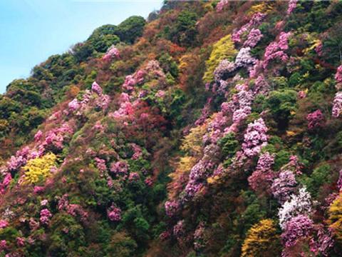 白马山原始森林旅游景点图片