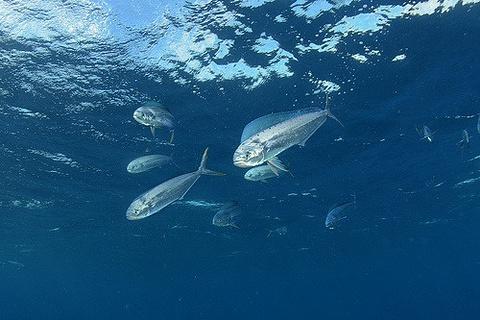 海洋探索者潜水学校