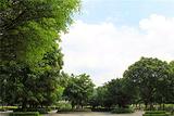 广州义务植树公园