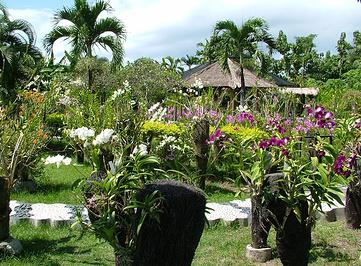巴厘岛兰花园