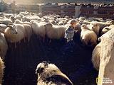 冰岛羊毛衣