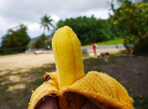 Fe'i Bananas