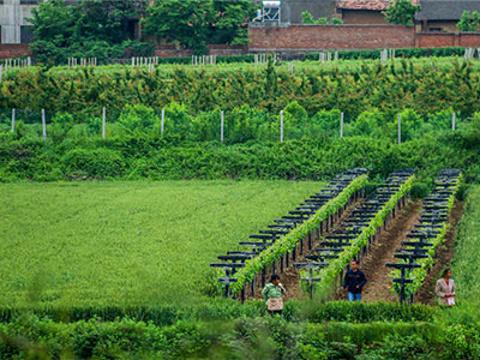 秦岭新西兰农场旅游景点图片