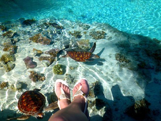 波拉波拉海龟中心