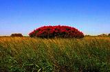 敦煌西湖国家级自然保护区