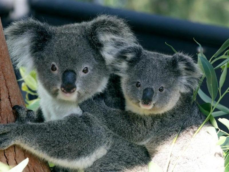 Taronga 动物园