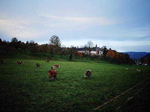 海德堡修道院旅游景点图片