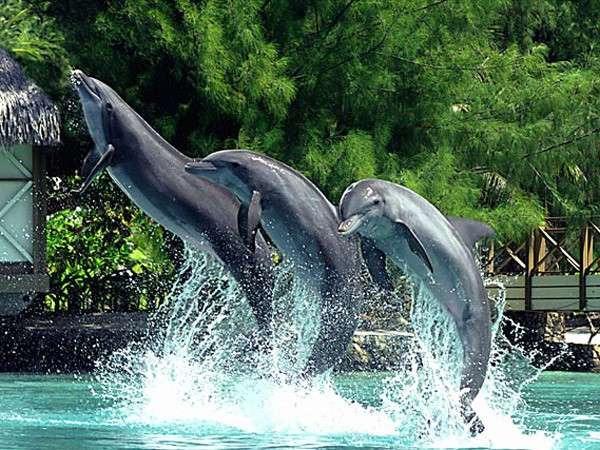 茉莉亚岛海豚中心