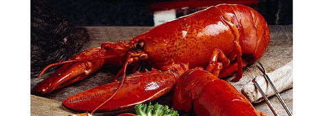 波士顿大龙虾