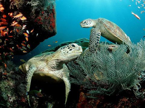 兰卡威海底世界旅游景点图片