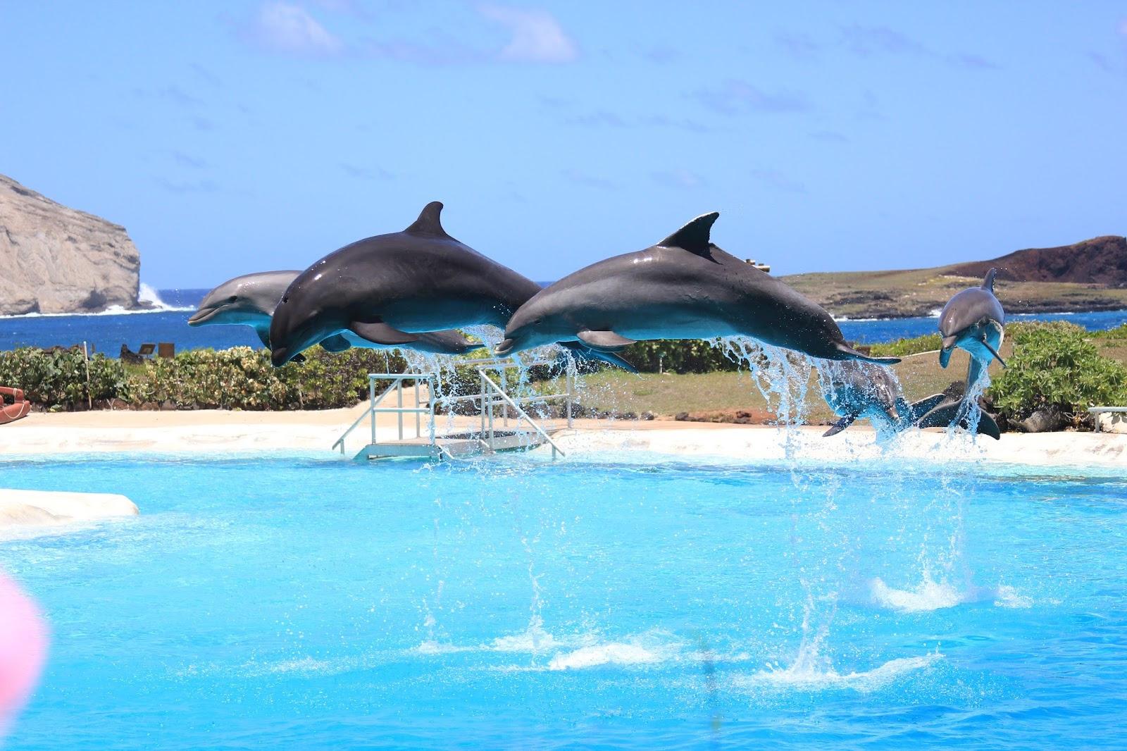 夏威夷海洋公园
