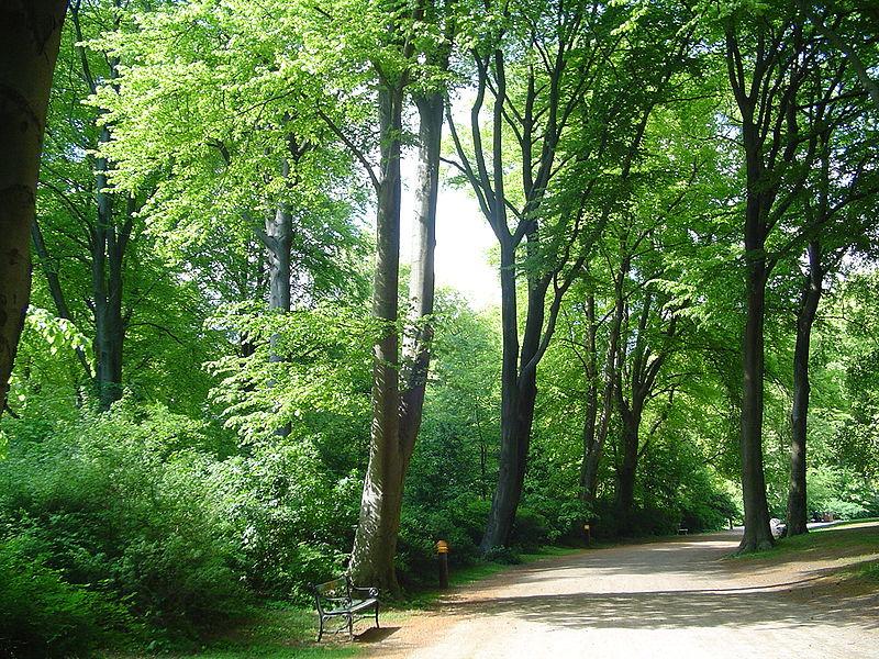 阿玛森林公园
