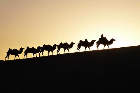 阿拉善骆驼文化