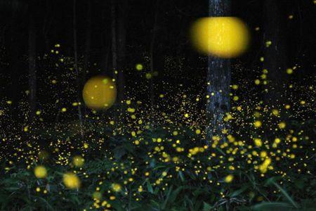 萤火虫公园