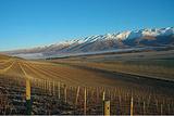 Central Otago葡萄酒