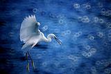 惊起一滩鸥鹭
