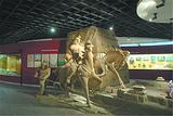 阿勒泰地区文物博物馆