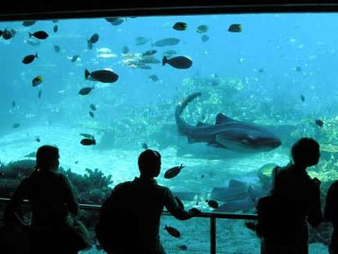 义乌海洋世界旅游景点图片