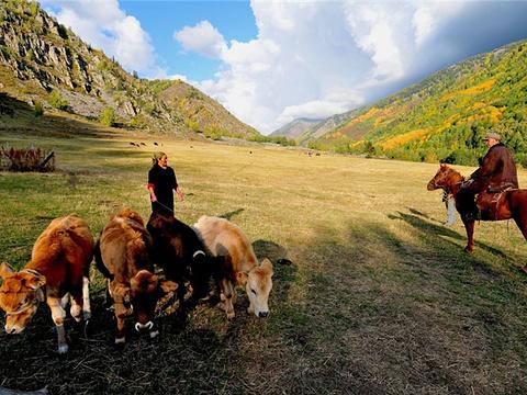 加什哈拉盖牧场旅游景点图片
