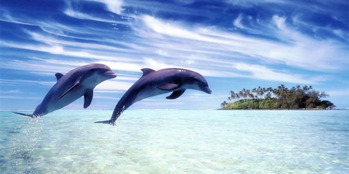 聆听精灵岛西追逐海豚之旅