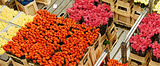 体验花卉产业