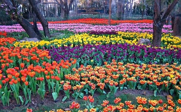 清莱花卉节