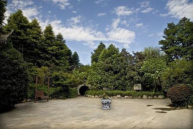 峨眉山竹叶青生态茗园