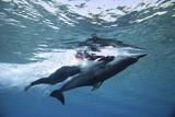 亲密接触海豚