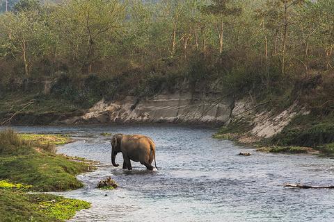 纳拉亚尼河(尼泊尔)