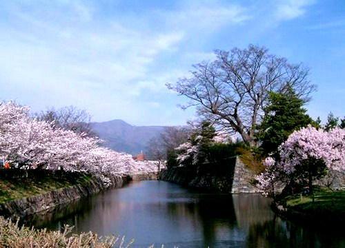 那霸樱花节