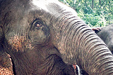 大象训练营