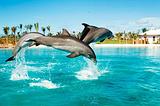 迪拜亚特兰蒂斯海豚湾