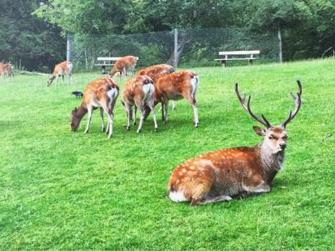 鹿园旅游景点图片