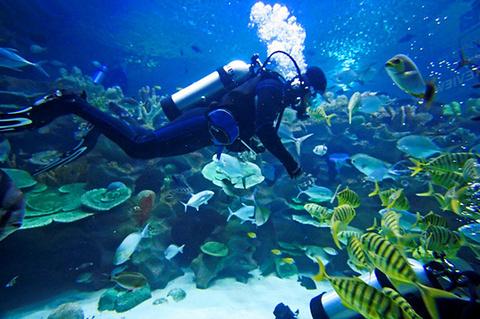 EcoSea Dive Day Trips