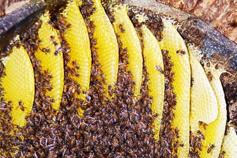 婺源土蜂蜜