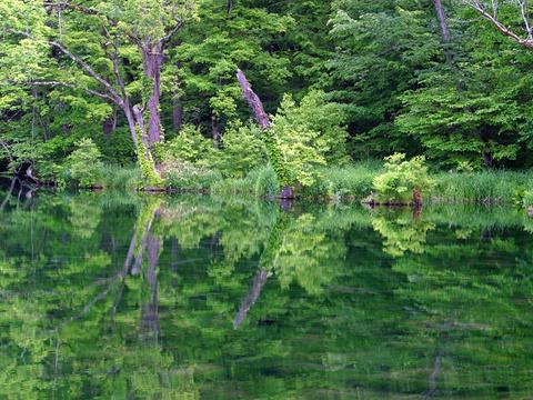鸟沼公园旅游景点图片