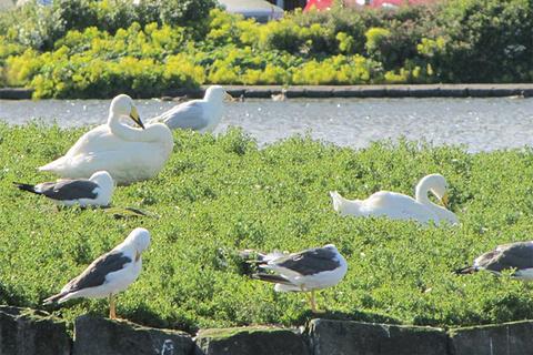 Vatnsmyri鸟类保护区