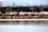 莲石湖郊野公园