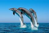 与海洋生物亲密接触